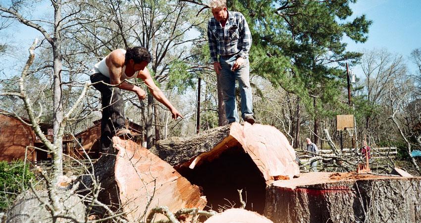 stump-grind