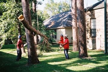 Tree Planting & Removal
