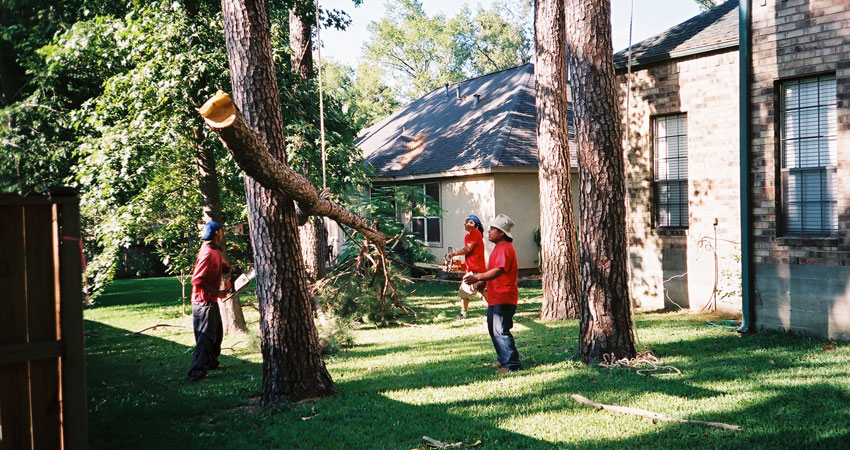 tree-removal-1
